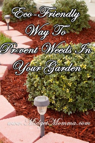Eco-Friendly Way To Prevent Weeds In Your Garden