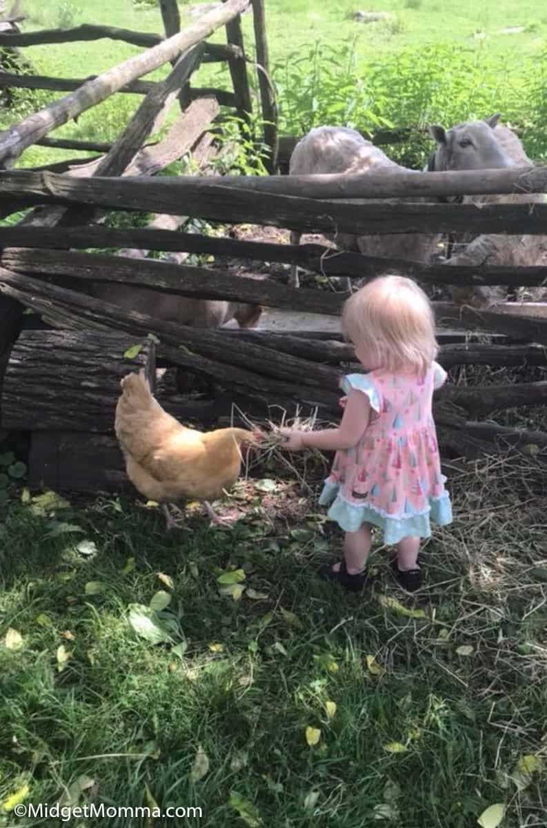 Child playing with a chicken at Quiet Valley Farm