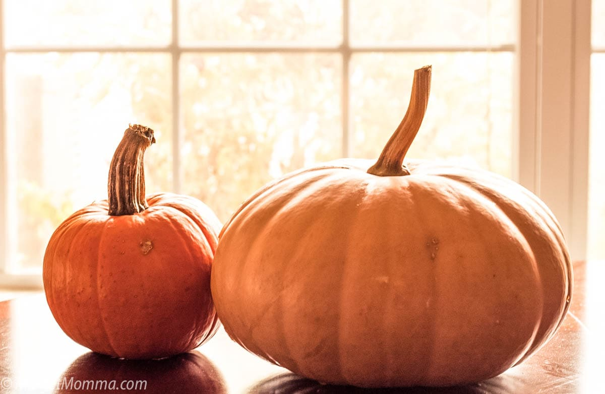 best pumpkins to use when making pumpkin puree