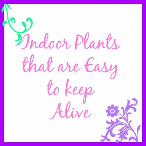 Indoor Plants that are Easy to keep Alive.jpg