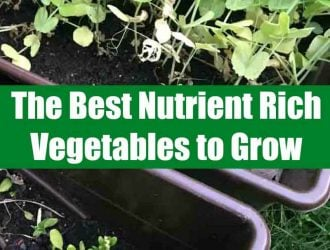 The Best Nutrient Rich Vegetables to Grow