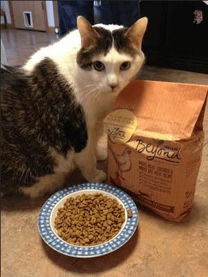 Purina Dry Cat Food