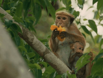 Monkey Kingdom Family Activity Packet & Educators Guide