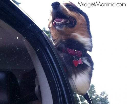 beneful dog ride