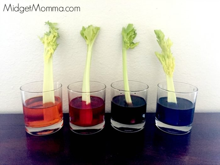 How Plants Drink Water Celery Science Experiment