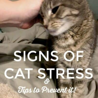 If you have a cat then you need to check out these signs of cat stress and how to prevent cat stress. It is important for cat owners to know the signs! #cats #CatStress #Pets #FurBabies #ad