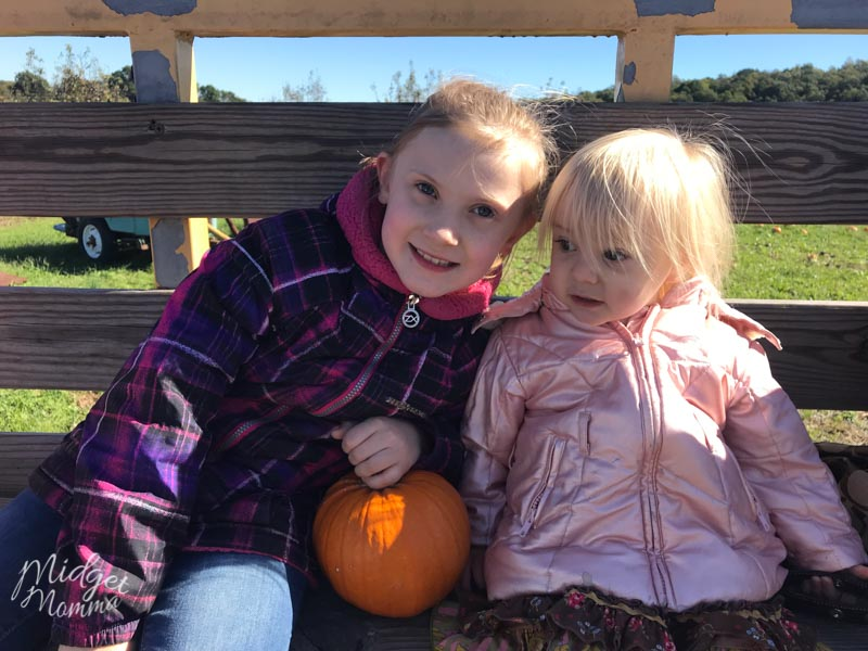 Kids at a pumpkin patch getting pumpkins to use when making pumpkin slime