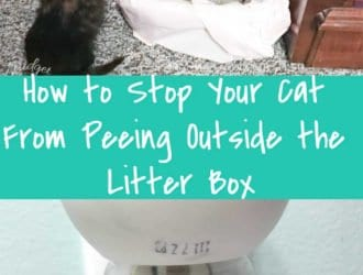 How to Stop Your Cat From Peeing Outside the Litter Box