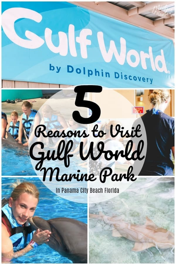Gulf World Marine Park in Panama City Beach Florida is the perfect place to visit for some fun and learning when in Panama City Beach Florida. Check out our 5 Reasons to visit Gulf World Marine Park in Panama City Beach Florida! #Travel #Florida #FamilyTravel